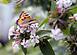 Butterfly On A Blossoming Bush, June Midday stock image