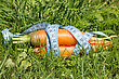 Carrot Wrapped By Measure Tape On The Grass stock image