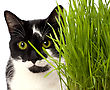 Cat In Grass Isolated On White Background stock image