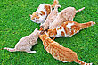 Cats & Kittens Cats Family During Feeding On Green Grass stock photography