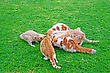 Cats Family During Feeding On Green Grass stock photo