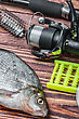Caught Fish And Fishing Tackle On A Wooden Table. Focus On The Eyes Of The Fish stock photography
