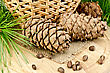 Cedar Cones, Nuts, Green Twigs, Wicker Basket On A Background Of Burlap Cloth And Wooden Board stock photo