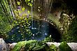 Torsion Cenote Ill Kill Mexico The Plant And The Water In The Hole stock photo
