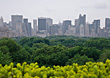 Central Park Skyline, New York, NY USA stock image