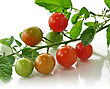 Cherry Tomatoes , Close Up stock image