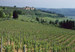 Chianti Vineyards, Tuscany, Italy stock photo