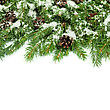 Christmas Background With Snow, And Cones Isolated On White stock photography