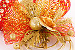 Christmas Bells Decoration Closeup Image