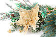 Christmas Decoration With Flower And Fir-tree Branch stock photo