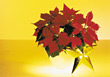 Christmas Poinsettias & Gold Star stock photo