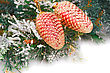 Christmas Shiny Cones, Fir-tree Branch On White Background stock photography