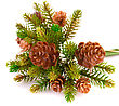 Christmas Tree Branch With Cones Isolated On White Background stock image