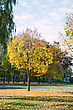 City Park With Autumn Leaves On The Trees Yellowed