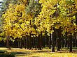 City Park With Autumn Yellow A Trees stock image