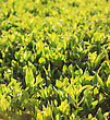 Close Up Of Fresh Green Grass In The Morning stock photography