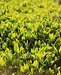 Close Up Of Fresh Green Grass In The Morning stock image