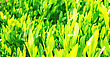 Close Up Of Fresh Green Grass In The Morning stock photo