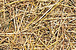 Close Up Golden Straw Texture stock photo