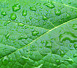 Close-up Of Green Leaf With Water Drops stock image