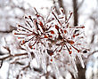 Close Up Of Ice On A Tree In Winter stock photography