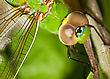 Close Up Look At A Common Dragonfly stock image