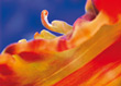 Close-up of Blooming Flower stock photography