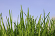 Close-up of Grass stock photo