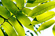 Close Up Of A Green Fresh Leaves stock photography