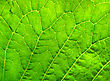 Close Up Of Green Leaf Texture stock image