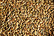 Close-up Of Roasted Pumpkin Seeds Showing Its Texture stock image