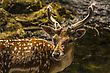 Close-up View Of A Deer In Its Natural Habitat stock photography
