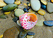 Scallop Closeup Of Colored Sea Conical Shell Over Wet Sand stock photo