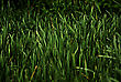 Closeup Of Green Fresh High Grass Lit By Sun At Sunny Summer Morning stock image