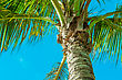 Coconut And Bluesky With Naturelight stock photography
