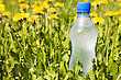 Cold Water Bottle In A Summer Meadow stock image