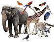 Collage Of Animals Images On White Background stock image