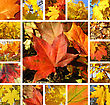 Collage From Photos Of Beautiful Autumn Maple Leaves stock image