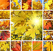 Collage From Photos Of Beautiful Autumn Maple Leaves stock photography