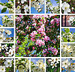 Collage Of Beautiful Flowering Trees stock photography