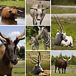 Collage Of Seven Different Animals In The Same Picture stock photography