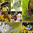 Collage Of Seven Different Butterflies In The Same Picture stock image