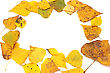 Collection Beautiful Colorful Autumn Leaves stock photo