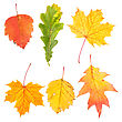 Collection Of Beautiful Colourful Autumn Leaves Isolated On White Background stock photo