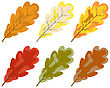 Collection Of Color Autumn Leaves. Vector Illustration. stock vector