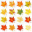Collection Of Color Autumn Leaves. Vector Illustration.