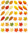 Collection Of Color Autumn Leaves. Vector Illustration