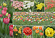 Flowerbed Collection Of Colorful Tulip Flowers stock photography