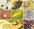 Collection Of Exotic Fruits,Close Up