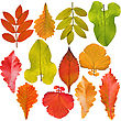 Icon Collection Of Tree Leaves stock image